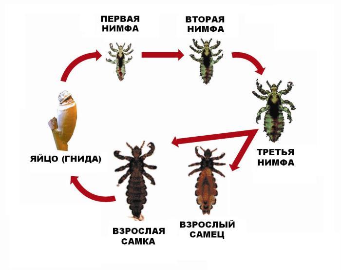 средство от паразитов в организме человека бактефорт